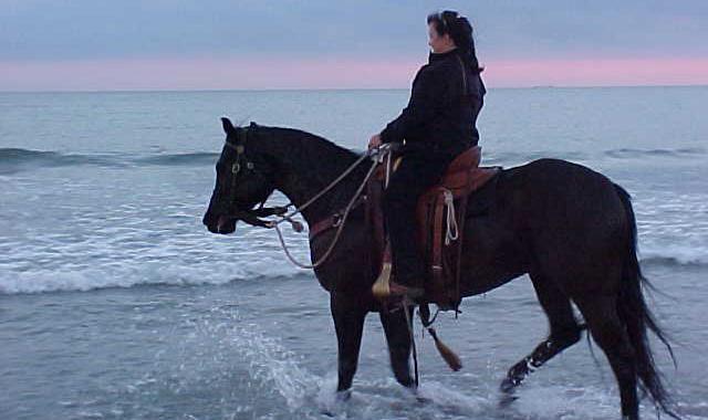 La mer à cheval:  Un rêve enfin réalisé!